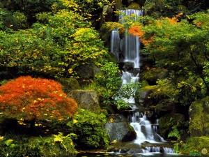 Природа Японии