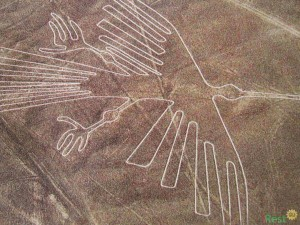 Рисунок Кондора в Наска - 120м