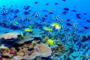 Большой Барьерный риф в Австралии. Фото 4