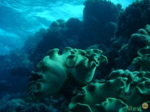 Большой Барьерный риф в Австралии. Фото 2
