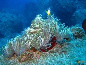 Подводные красоты острова Маврикий