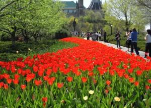 Куда поехать путешествовать. Канадский фестиваль тюльпанов