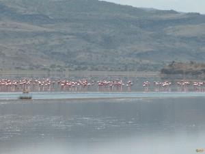 Озеро Натрон. Фото