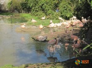 Фламинго в зоопарке Цюриха