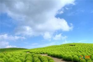 Японский парк Хитачи