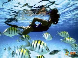 Подводный мир острова Барбадос
