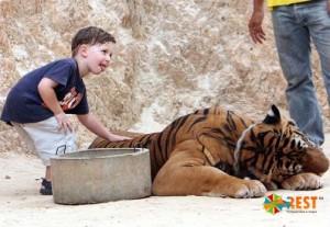 Храм тигров. Фото 2