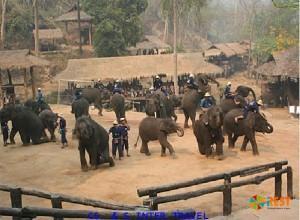 Лагерь слонов Маетаман