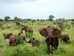 Одни из представителей Крюгер-парка в ЮАР