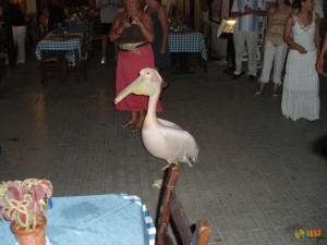 Внутри ресторана The Pelican