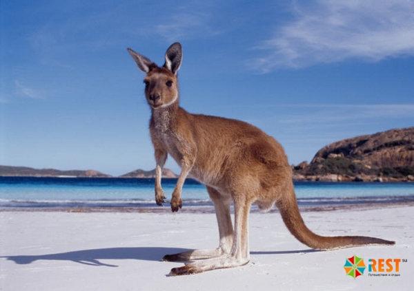 Когда лучше посетить Австралию?