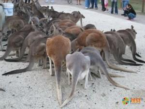 В национальном парке «Каррамбин»