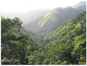 Национальный парк «Голубые горы». Фото 1
