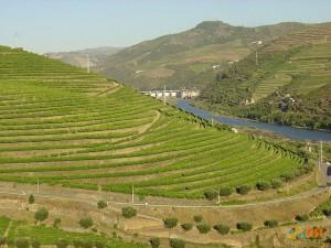 Виноградные плантации Peso da R?gua