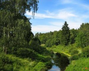 Былины «пушкинского» леса — репортаж с места событий