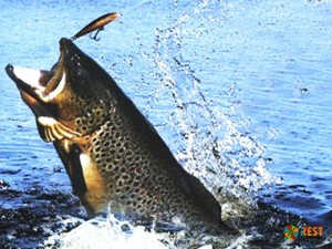 Рыбалка…