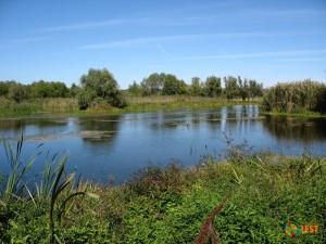 Каким образом осуществляется очистка рек и озер?
