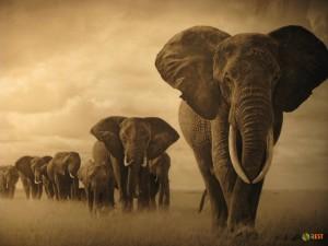 Африка – колыбель языков мира