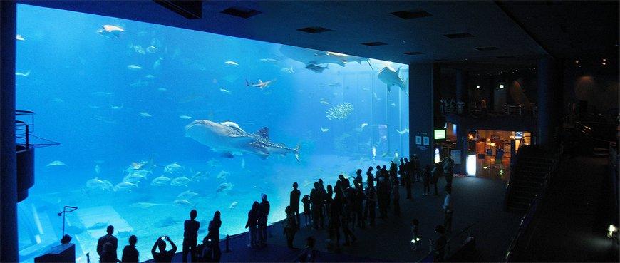 Гигантский аквариум Чурауми, Окинава, Япония