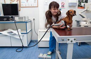 Как работают ветеринарные клиники?